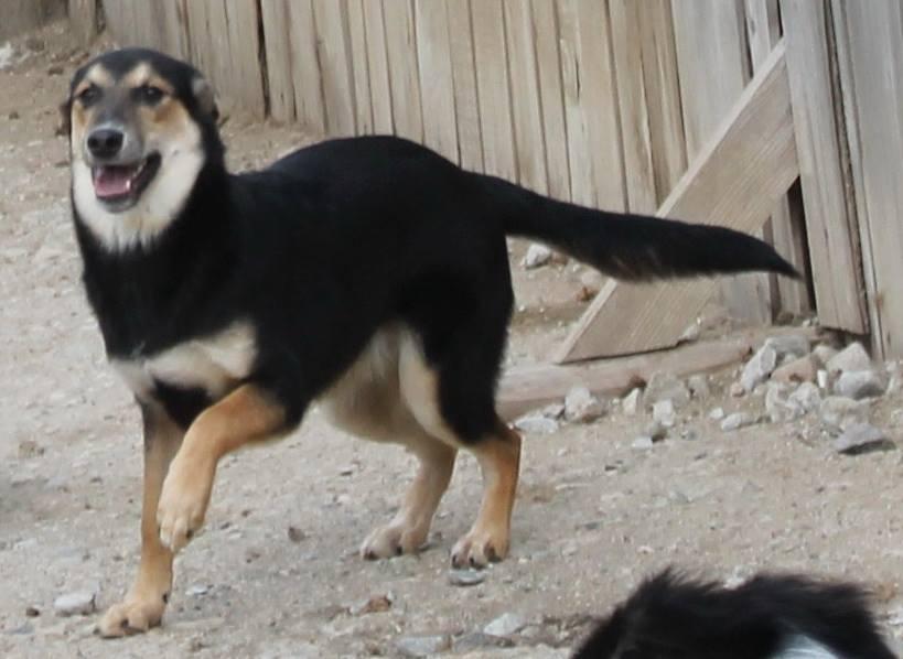 Rudozem Street Dog Rescue Uk
